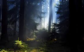The 'Black' Forest